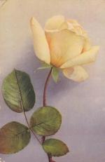Почтовая карточка  Роза